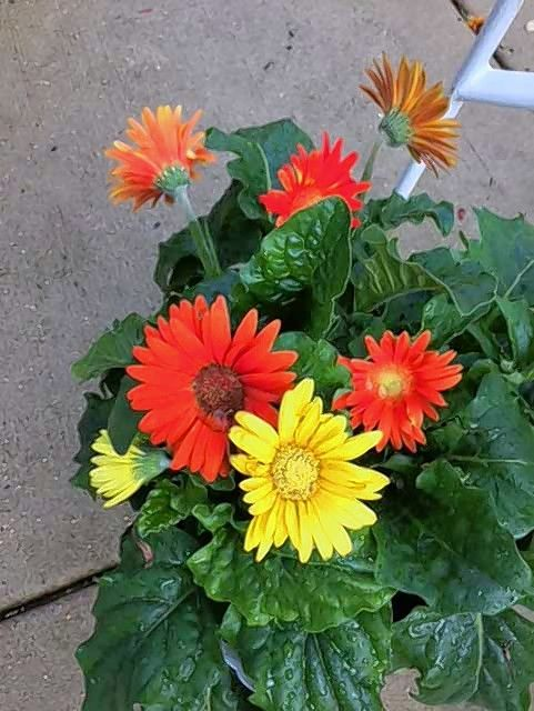 Grief Patio Gardens Cheer Everyday Life