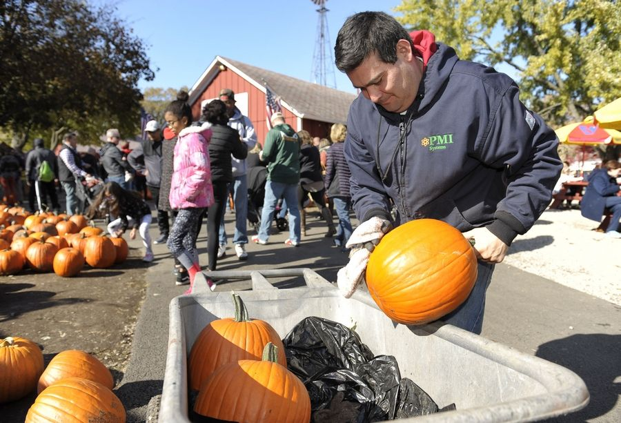 Michael Lopez of Wheaton, a seasonal worker, wipes down pumpkins to add to one of several patches at Sonny Acres Farm in West Chicago. He estimated he had brought out at least 100 pumpkins within a few hours to replenish the patches.