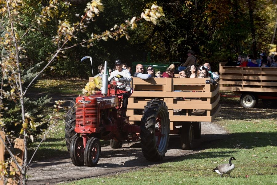 On a sunny day at Sonny Acres Farm in West Chicago, Sal Bartalone of Carol Stream takes visitors on a hay ride.