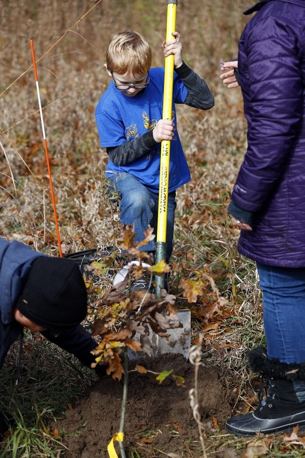 Meyer Gavzer, 6, of Chicago and Cub Scout Pack 3815, uses all his might to dig a hole Sunday while planting trees at Volo Bog State Natural Area in Ingleside. Donated by the Illinois Conservation Foundation, the oak trees will be part of an oak savanna and woodland restoration effort.