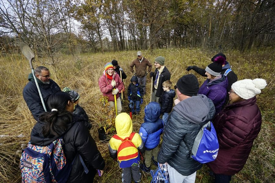 IDNR Naturalist Stacy Iwanicki demonstrates the proper way to ready a hole for an oak sapling as Cub Scouts prepare to help Sunday with the creation of an oak savanna at the Volo Bog State Natural Area in Ingleside.