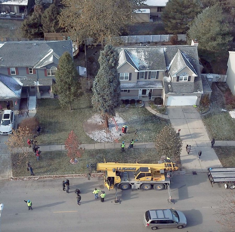 A crane was used to lift a tree out of the yard of Gene and Connie Nelson's Elgin home Thursday. It will become Chicago's 106th Christmas tree.