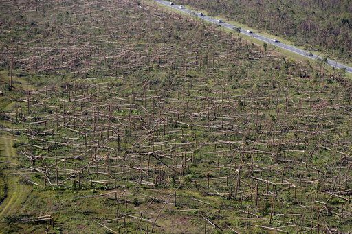 FILE - In this Oct. 12, 2018, file photo, downed trees are seen from the air near Tyndall Air Force Base in the aftermath of Hurricane Michael near Mexico Beach, Fla. The federal government is sending $800 million in aid to farmers in four southern states that were most devastated last year by hurricanes Michael and Florence. Nearly half of that money will benefit Florida timber farmers, who suffered catastrophic losses when Hurricane Michael came ashore in October 2018 and destroyed 2.8 million acres of timberland.