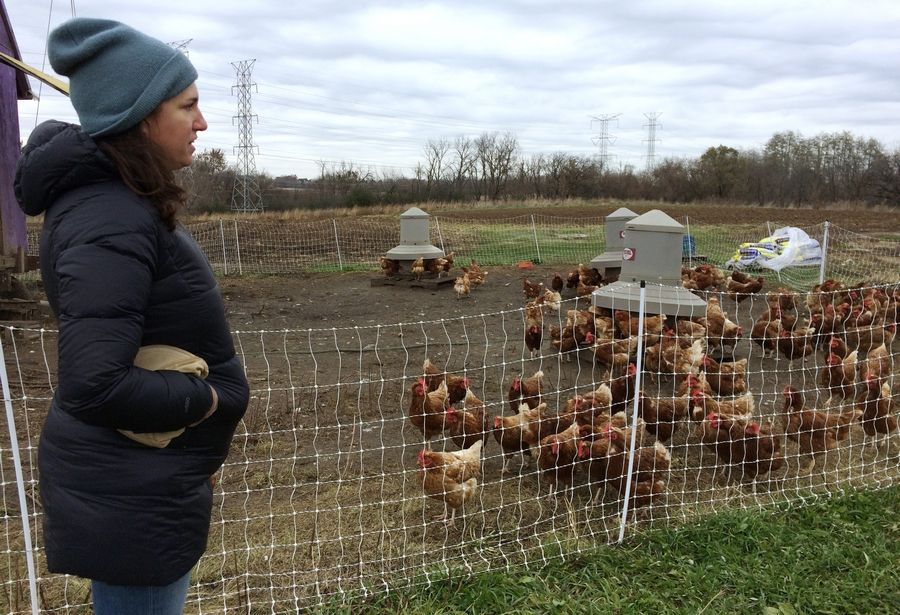 Radical Root organic farm co-owner Alison Parker with pasture-raised chickens. The operation is closing after six years.