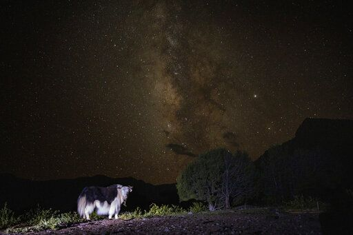 The Milky Way glows behind a yak in Angsai, an area inside the Sanjiangyuan region in western China's Qinghai province on Monday, Aug. 26, 2019. 'œThis is one of the most special regions in China, in the world,'� says Lu Zhi, a Peking University conservation biologist who has worked in Qinghai for two decades.