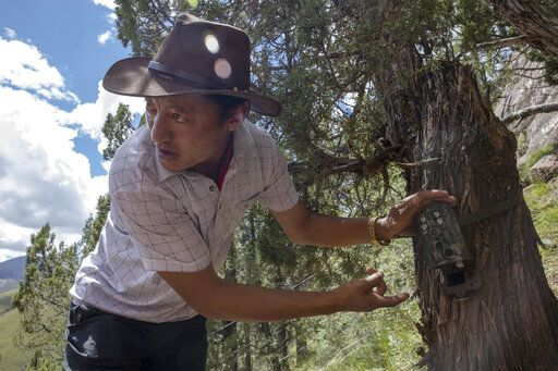 Kunchok Jangtse positions a camera trap in Angsai, an area inside the Sanjiangyuan region in western China's Qinghai province on Tuesday, Aug. 27, 2019. The Tibetan herder also has a job installing and maintaining the motion-activated cameras, which help scientists monitor endangered species in the area. 'œOur religion is connected with wild animals, because wild animals have a consciousness and can feel love and compassion _ therefore, we protect wild-animals,'� he says.