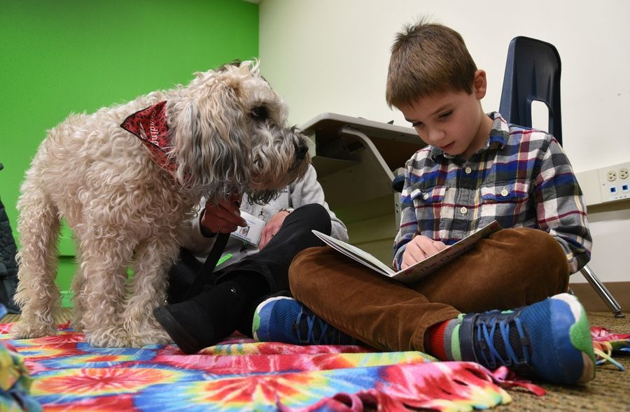 Butterfield School third grade student Kai Nicol reads to K-9 Reading Buddies of the North Shore therapy dog, Max, at the Libertyville elementary school Wednesday.
