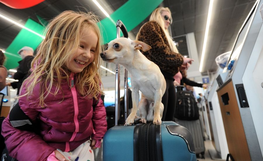 Chelsie Gapes of Chicago checks in at Terminal 3 at O'Hare International Airport while her dog Ollie plays around with passenger Mira Friedman, 6, of Chicago as they head out for the Thanksgiving Day holiday.