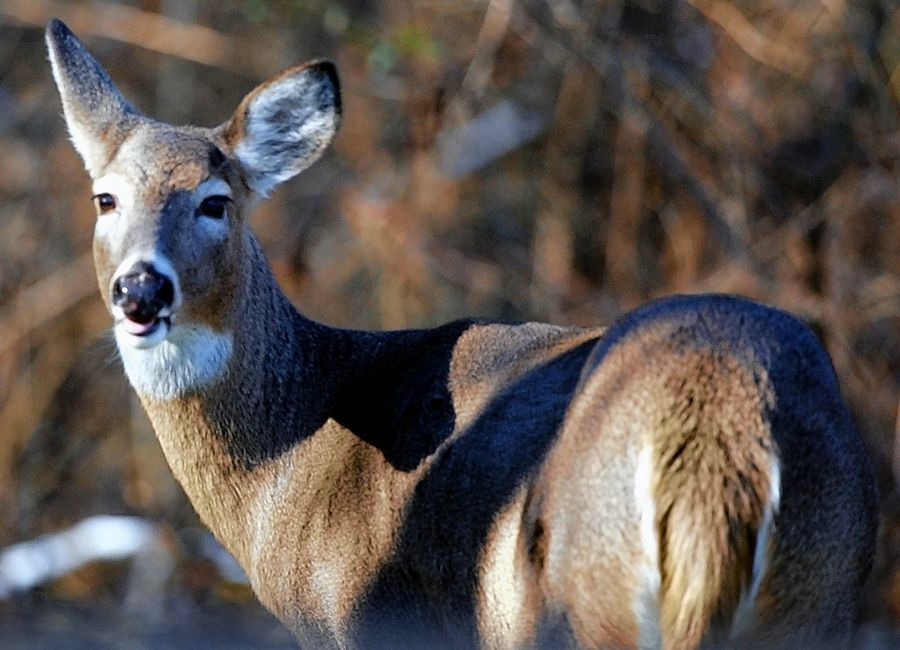 It's rutting season through early December for whitetail deer, and Mike Jackson looks back on what he went through to capture the moment.