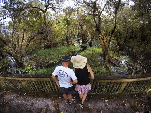 In this Sunday, Oct. 20, 2019 photo, visitors view the scenery and wildlife in the swamp at the Big Cypress National Preserve in Florida.