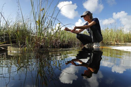 In this Monday, Oct. 21, 2019 photo, Tiffany Troxler, research scientist and professor at Florida International University walks on a boardwalk at a wetlands research site at Everglades National Park near Flamingo, Fla. She's studying wetlands ecosystem ands its relation to sea-level rise.