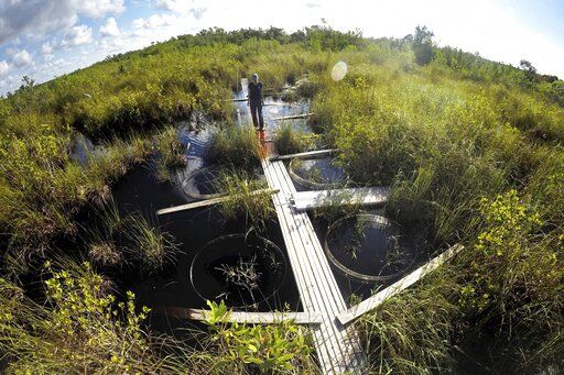 In this Monday, Oct. 21, 2019 photo, Tiffany Troxler, research scientist and professor at Florida International University walks on a boardwalk at a wetlands research site at Everglades National Park near Flamingo, Fla. She's studying wetlands ecosystem and its relation to sea-level rise.