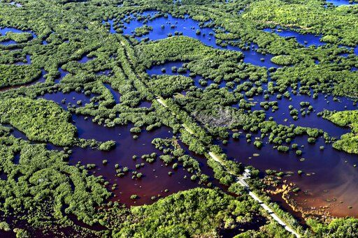 In this Thursday, Oct. 24, 2019, photo, the Marsh Trail bisects a section of the Ten Thousand Islands National Wildlife Refuge in the western Everglades near Naples, Fla. Clusters of mangroves form islands in a shallow estuary. A healthy mangrove forest is important for protecting coasts during storms.