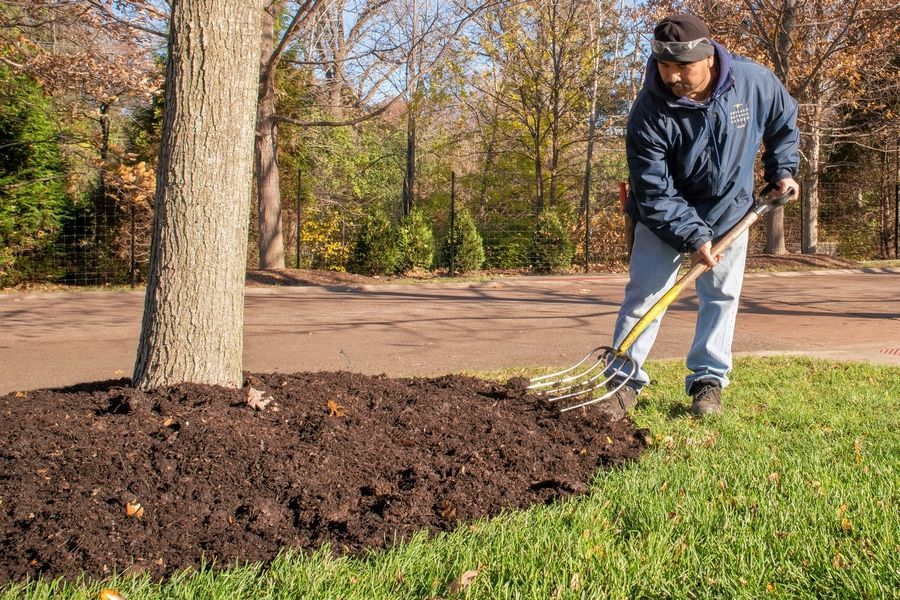 If you prefer a neat and tidy look for the winter, cut back your perennials and top dress the bed with a light layer of mulch.