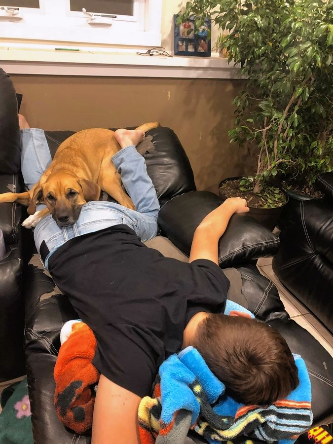 Xena, a coonhound-Rhodesian ridgeback mix, has rarely left the side of 13-year-old Jack Martin of Algonquin since he was diagnosed with cancer in October. Martin's family is searching for the dog after she went missing Jan. 4.