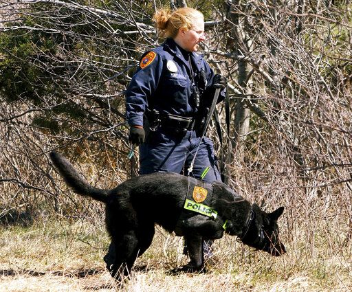 FILE - In this March 29, 2011, file photo, a Suffolk County Police Department officer and dog search the Gilgo Beach area on New York's Long Island. Investigators stymied by a nine-year mystery following the discovery of 11 sets of human remains strewn along a suburban New York beach highway revealed a previously unreleased photograph Thursday, Jan. 15, 2020, of evidence found at one of the crime scenes that they say was handled by an unknown suspect. (Jim Staubitser/Newsday via AP, File)