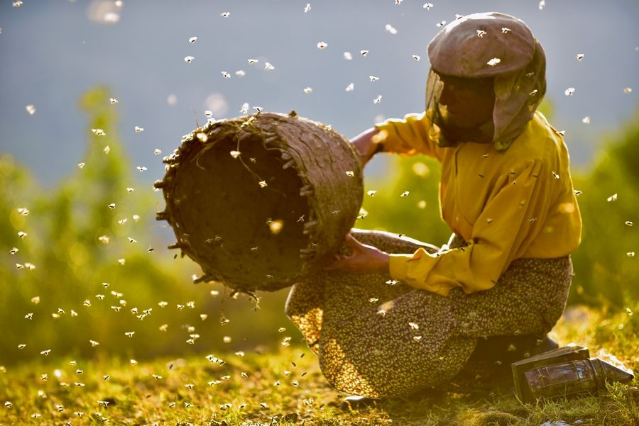 "When a nomadic family move in and break Honeyland's basic rule, the last female wild beekeeper in Europe must save the bees and restore natural balance. The 2019 documentary ""Honeyland"" will be shown Monday, Feb. 17, at the Tivoli Theatre."