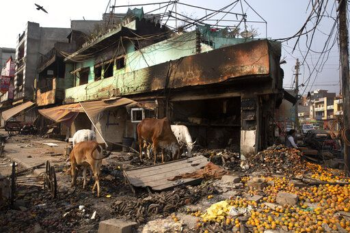 Stray cows feed on oranges lying outside a vandalized and burned shop following Tuesday's violence in New Delhi, India, Thursday, Feb. 27, 2020. India accused a U.S. government commission of politicizing communal violence in New Delhi that killed at least 30 people and injured more than 200 as President Donald Trump was visiting the country. The violent clashes between Hindu and Muslim mobs were the capital's worst communal riots in decades and saw shops, Muslim shrines and public vehicles go up in flames.