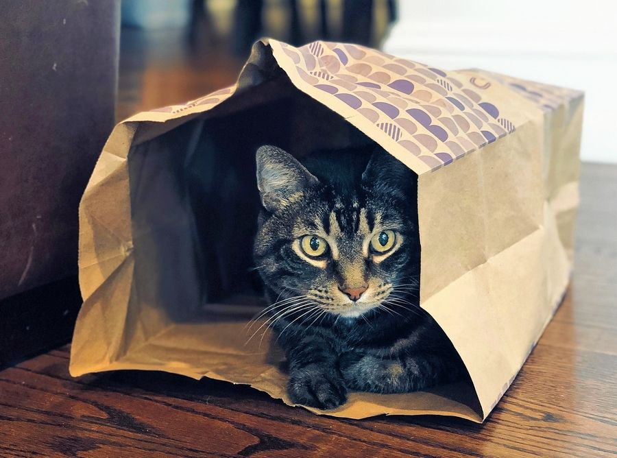 Sometimes all you need to entertain a cat is a paper bag.