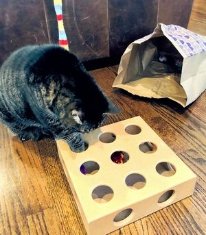 Keep an Indoor Cat Amused with Toys
