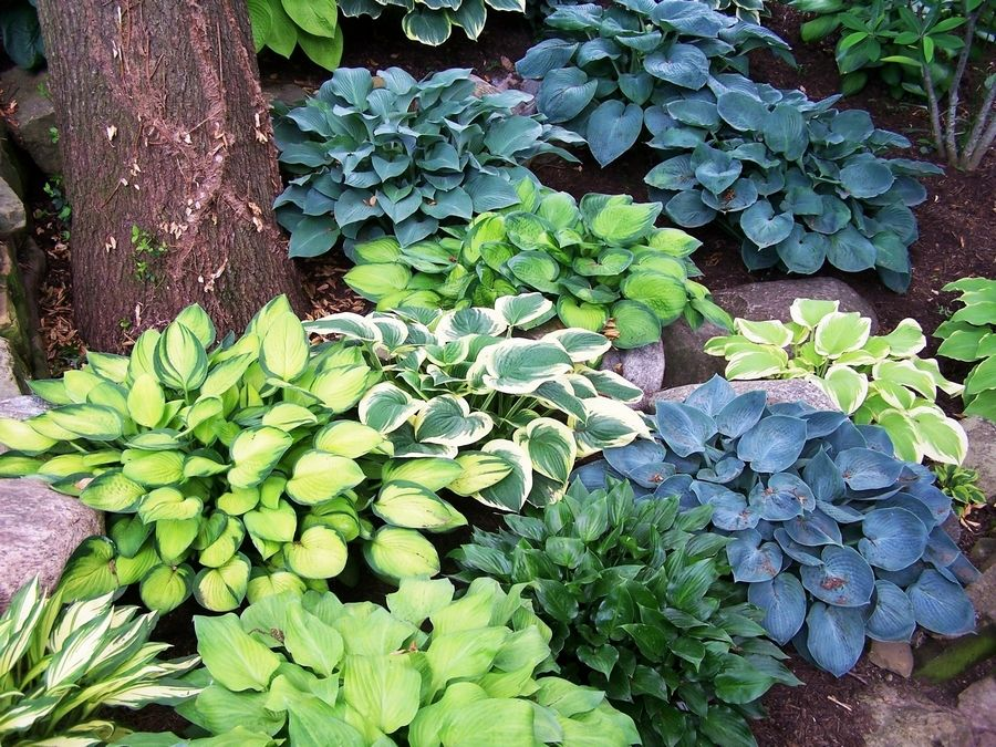 A Few Suggestions For Plants That Love The Shade