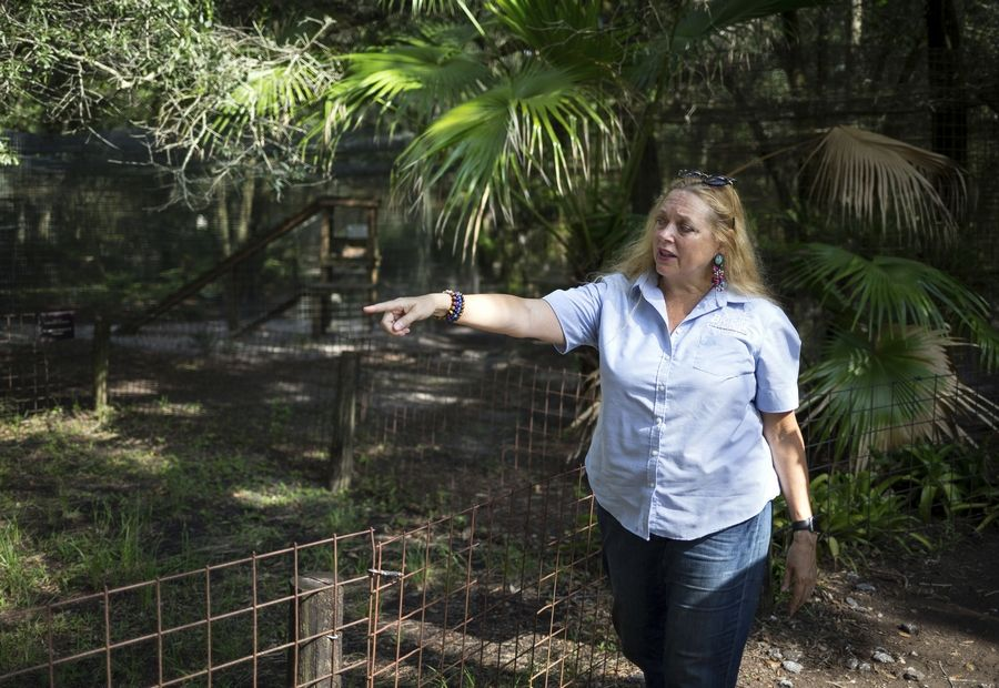 "Carole Baskin, founder of Big Cat Rescue, walks the property near Tampa, Fla. A federal judge in Oklahoma has awarded ownership of the zoo made famous in Netflix's ""Tiger King"" docuseries to Joe Exotic's rival, Carole Baskin."