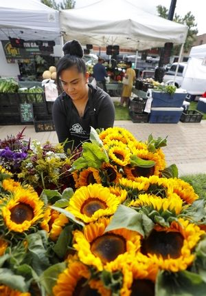 Diana Lopez of Harvard sorts through some sunflowers during last year's MainStreet Libertyville Farmers Market, which is held Thursdays through October.