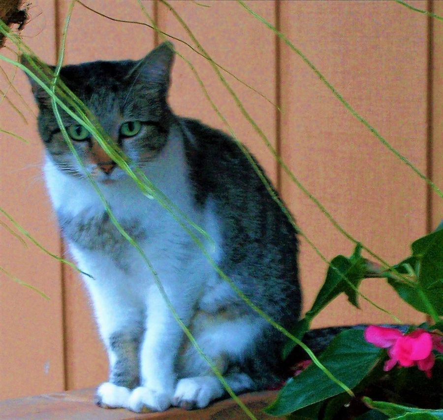 On Pets columnist Diana Stoll recently had to say goodbye to her senior cat, Abby, who almost made it to her 20th birthday. In her younger days, she loved sitting on the front porch railing.