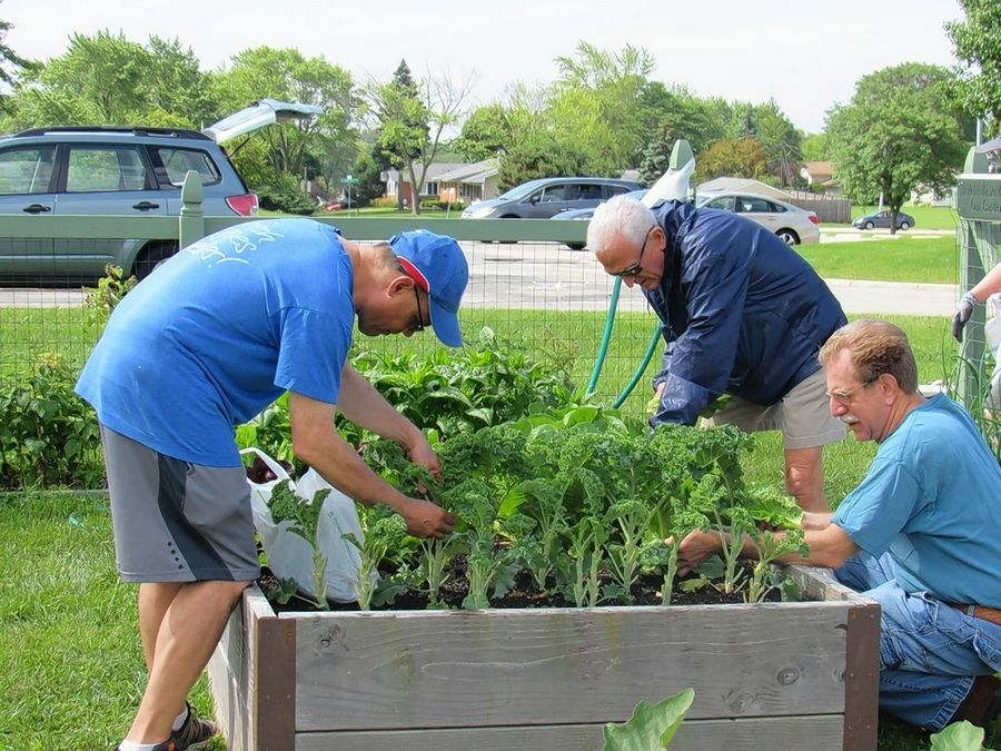 Don Moos, Howard Washer and Stephen Schwartz work in the garden at Beth Tikvah in Hoffman Estates.