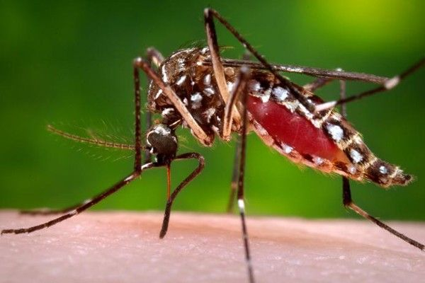 Female mosquitoes are the ones that bite humans to feed on their blood, which they use as fuel to produce and lay eggs.