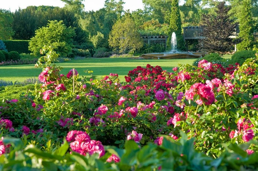 For garden lovers, one auction package includes four tickets to the Chicago Botanic Garden in Glencoe, gift cards to a garden center, and nature related artwork.