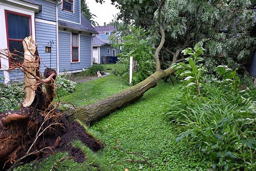This tree fell Thursday night on the 300 block of Jefferson Avenue in Elgin.