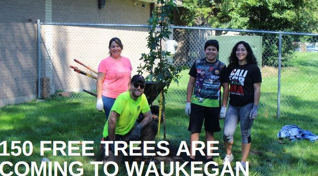 Openlands will give 100 free trees to Waukegan residents and plant 50 more trees in public places.