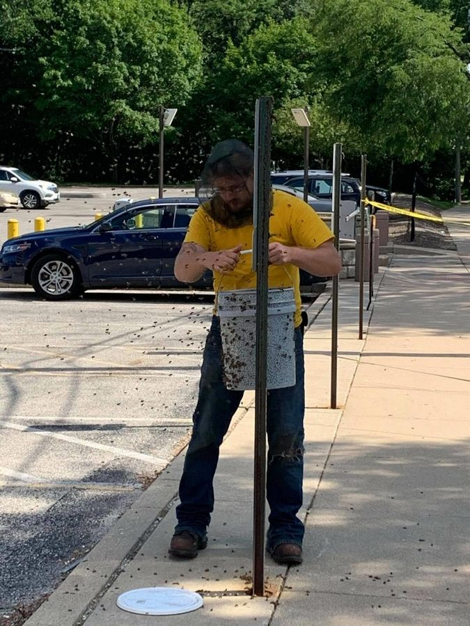 Beekeeper Willie Pilipauskas, 31, was called to move a swarm of bees from a reserved parking sign and a nearby car outside of the Lake County sheriff's headquarters in Waukegan Monday.