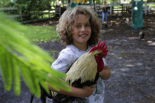 "Liam Hunter holds a rooster at the Family Horse Academy where his mother Timea Hunter is hoping to organize education for a group of children during the coronavirus pandemic, Friday, July 31, 2020, in Southwest Ranches, Fla. Confronting the likelihood of more distance learning, families across the country are turning to private tutors and ""learning pods"" to ensure their children receive some in-person instruction. The arrangements raise thorny questions about student safety, quality assurance, and inequality."