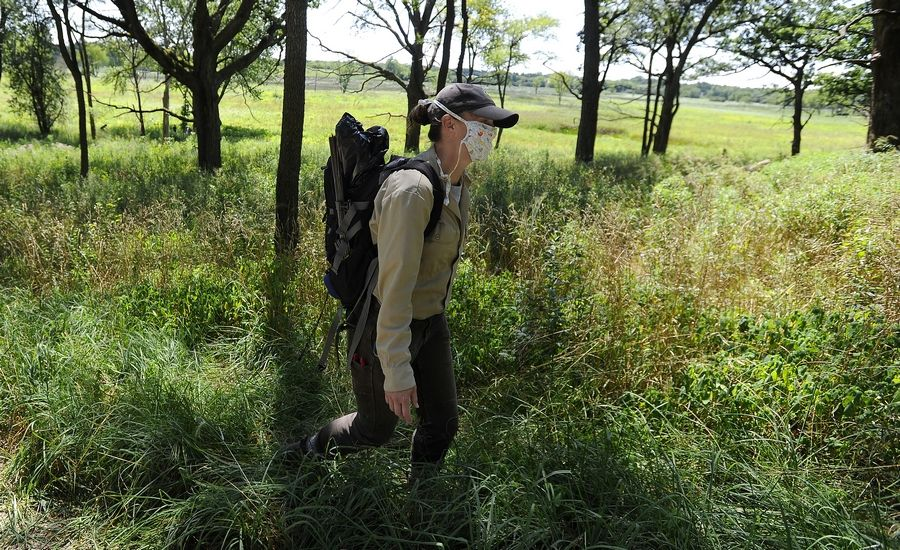 Lake County Forest Preserve stewardship ecologist Kelly Schultz walks to a patch of wild bergamots Tuesday at the Grassy Lake Forest Preserve near Barrington. She recently observed an endangered rusty patch bumble bee in another location on the same type of flower.