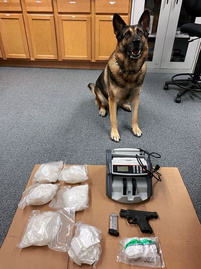It was Lake County Sheriff's police dog Duke sniffing air around a stopped vehicle that enabled sheriff's deputies to search the trunk, finding a large quantity of drugs as well as a stolen firearm and bill counter, the sheriff's office said in a news release.
