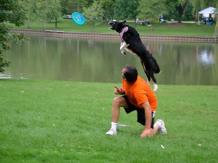 A dog shows off his tricks as part of the entertainment during a previous Barkapalooza. This year, participants can take part in online activities.