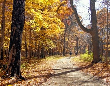 Most of the Des Plaines River Trail in Lake County is within forest, so there are plenty of trees to show colors in the fall.