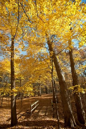 Take in fall foliage on routes of up to 11 miles near the shores of the Des Plaines River in Cook County.