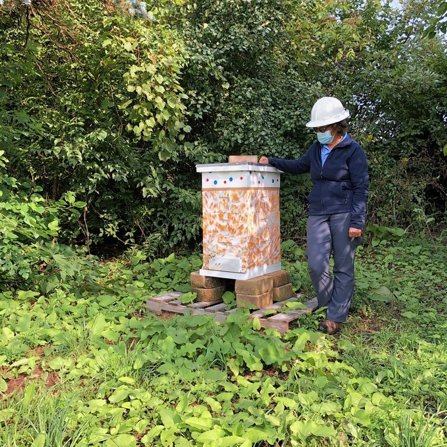 Renwood Golf Course Superintendent Sandy Bemi shows one of three bee hives installed at the Round Lake Beach course.