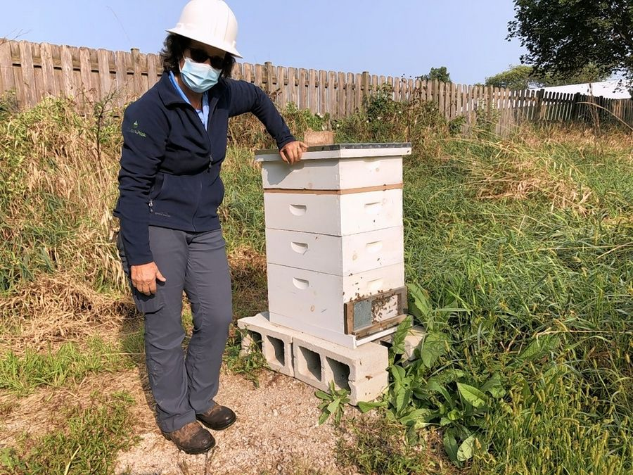 Renwood Golf Course Superintendent Sandy Bemis has installed three bee hives at the Round Lake Beach course to help the environment.