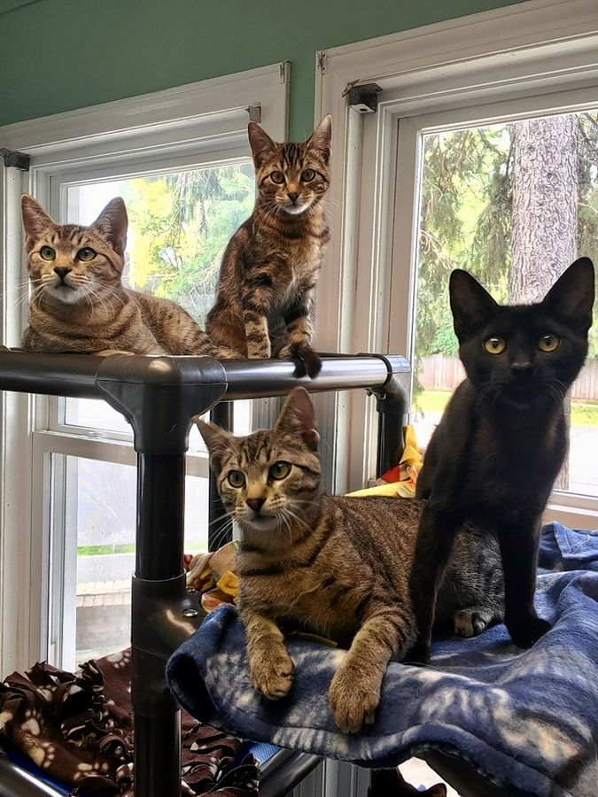 These are some of the cats that have found a home at Barb's Precious Rescue and Adoption Center, 313 N. Quentin Road in Palatine. The shelter, which opened in 2014, is undergoing a $1.2 million expansion.