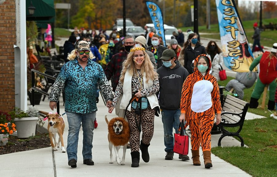 "Shelly Graham of Long Grove, center and dressed as Carole Baskin of ""Tiger King"" fame, leads her dog Mac, dressed as a lion, and others on a march during Sunday's third annual Pet Costume Parade in Long Grove."