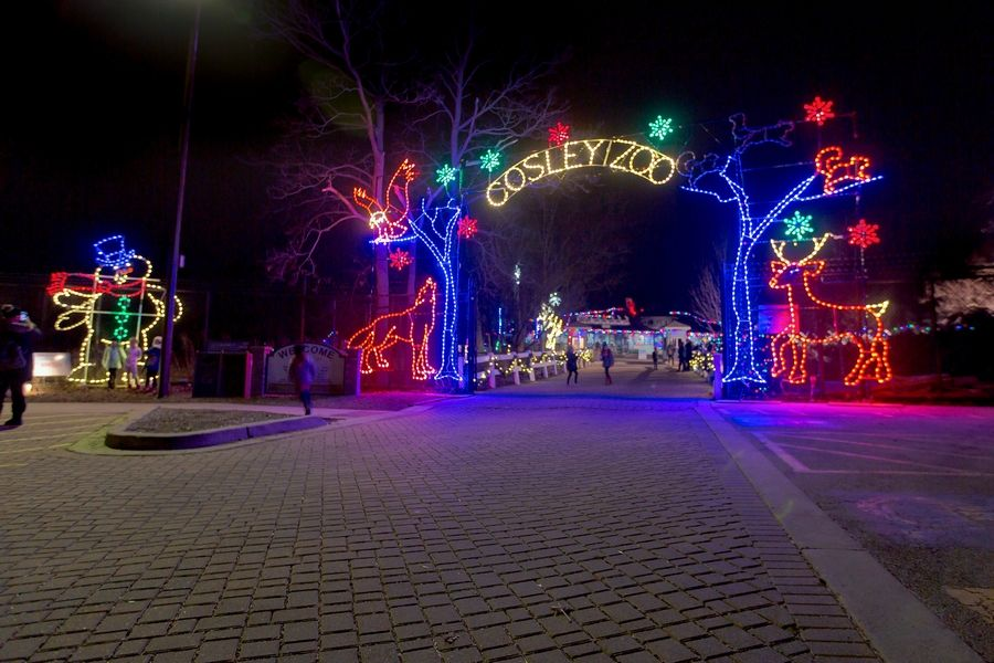 Order your timed tickets now for Cosley Zoo's annual Festival of Lights and Tree Sale, opening Friday, Nov. 27.