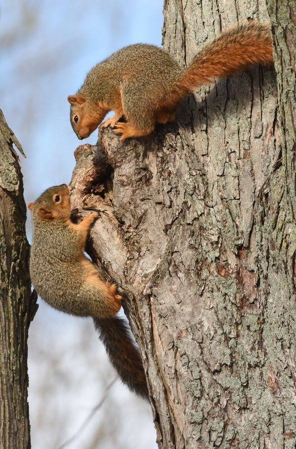 "It will be ""Scurrying Squirrels"" time for the upcoming ""Little Saplings"" nature program for children, age 3 to 5."