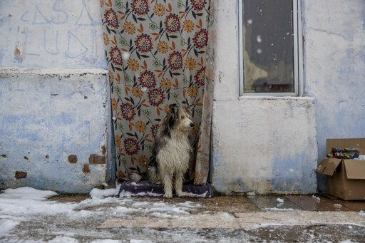 A dog stands outside a house as the snow falls at the Canada Real shanty town, outside Madrid, Spain, Friday, Jan. 8, 2021. An illegal informal settlement that has spread over several decades with mostly poor Spaniards, Roma people and Moroccan migrants seeking a place to live, La Cañada's poor housing and make-shift shacks stretches some 14 kilometers (9 miles) along what was once a drover's pathway on the Spanish capital's southeastern industrial outskirts. Nowadays, it's home to some 7,500 people of low or no income.