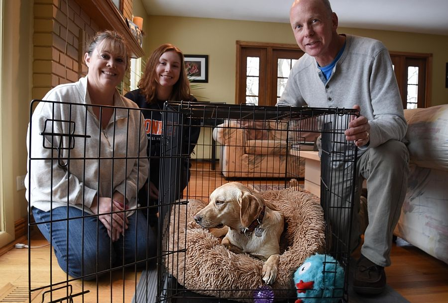 Jennifer, left, and Rich English, and their daughter Cady are happy to have Daisy, their 15-month-old Labrador retriever, back after she was missing for five days from her Sleepy Hollow home.