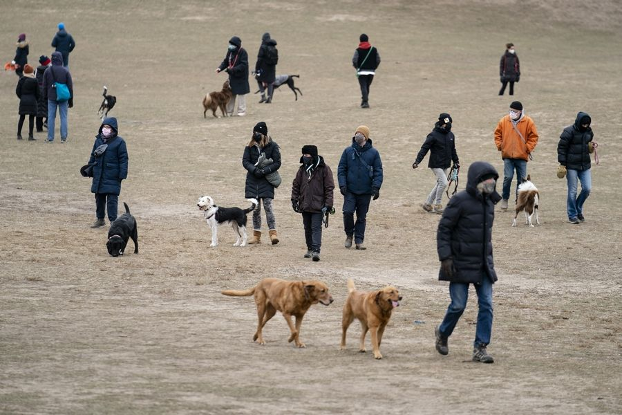 Dogs and their owners play in Prospect Park's Long Meadow during off-leash hours in New York. Go to any dog park right now and you'll probably find lively pandemic puppies, along with new owners learning the ins and outs of off-leash play.
