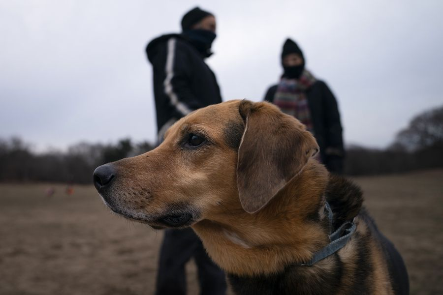"""Harvest, a longtime reveler to Prospect Park's Long Meadow, plays off-leash during designated free-roaming hours. """"It's nice people are experiencing the joy of dog ownership,"""" said Ted Hausman, who's been bringing Harvest to the park for years. """"It's a good silver lining to the pandemic."""""""